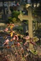 Смертность за первые 12 недель года в Латвии выросла на 29,8%