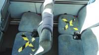 Максимальное количество пассажиров в общественном транспорте увеличено до 65%