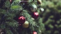 Советы, как избавиться от новогодней елочки дружелюбным к окружающей среде способом