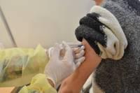 В коалиции вновь будет обсуждаться введение обязательной вакцинации от «Covid-19»
