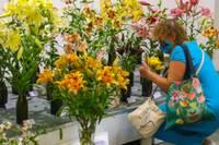 Дом латышского общества приглашает на выставку лилий