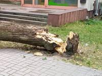 На ул.Т.Брейкша на автомашину упало дерево
