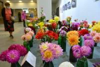 Королевы осенних цветов – георгины