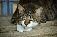 На улице Приежу ранен кот, виновного ищут